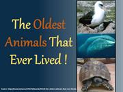 The Oldest Animals That Ever Lived