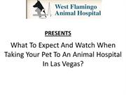 What To Expect And Watch When Taking Your Pet To An Animal Hospital In