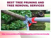 Best Tree Pruning And Tree Removal Services
