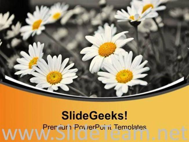 White Daisy Flower Background Powerpoint Template Powerpoint Template