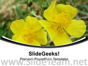 YELLOW FLOWERS WITH BACKGROUND POWERPOINT TEMPLATE