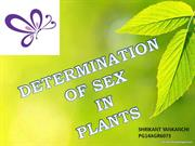 sex_determination in plants - Copy