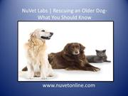 NuVet Labs | Rescuing an Older Dog- What You Should Know