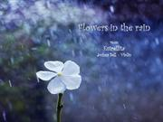 1-Rain-Flowers in the rain-Hoa du01B0u1EDBi mu01B0a