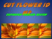 Cut Flower ID 1-2 -expanded