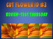 Cut Flower ID 1-3 -expanded