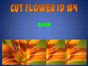 Cut Flower ID 1-4 - expanded