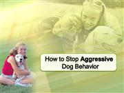 How to Handle Aggressive Dog Behavior