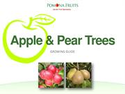 Apple and Pear Trees Growing Guide