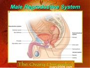 Human system of Male reproductive