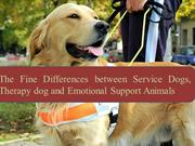 The Fine Differences between Service Dogs, Therapy dog and Emotional S