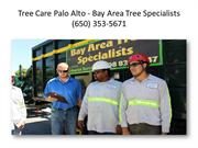 Tree Care Palo Alto - Bay Area Tree