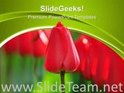 RED TULIPS BEAUTY NATURE POWERPOINT TEMPLATE
