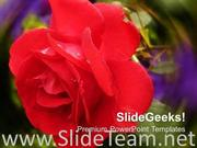 RED ROSE BEAUTY NATURE POWERPOINT TEMPLATE