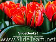 RED TULIPS FLOWERS BEAUTY POWERPOINT TEMPLATE
