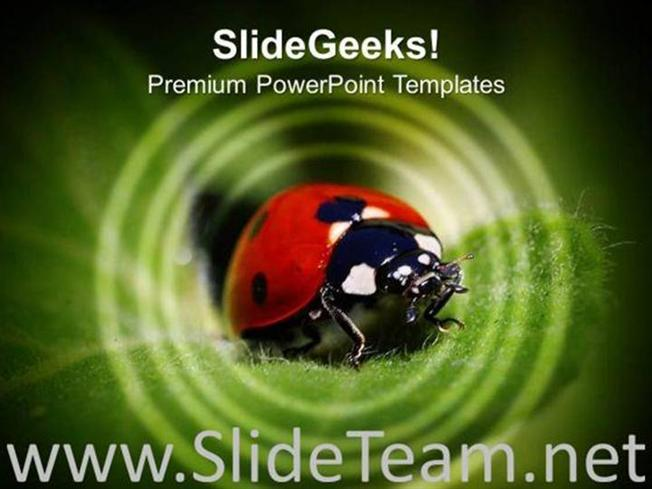 Ladybug Insects Animals Powerpoint Template Powerpoint Template