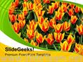 FLOWERS TO BE DECORATED FOR CELEBRATION POWERPOINT TEMPLATE
