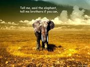 Elephants song