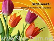 ILLUSTRATION OF COLORFUL TULIP FLOWERS POWERPOINT TEMPLATE