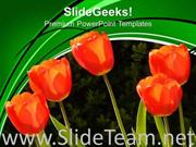 IMAGE OF RED TULIPS POWERPOINT TEMPLATE