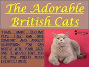 The Adorable British Cats