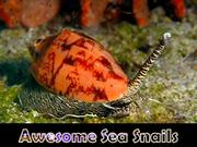 Awesome Sea Snails