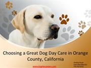 Choosing a Great Dog Day Care in Orange County, California