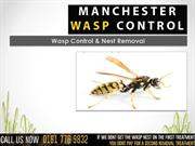 Manchester Wasp Control