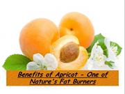 Benefits of Apricot - One of Nature's Fat Burners