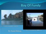 Bay Of Fundy report