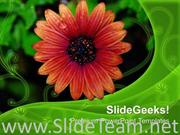 FLOWER WITH DEW DROPS NATURE POWERPOINT TEMPLATE