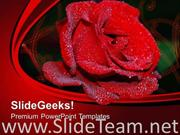 RED ROSE FLOWER BEAUTY POWERPOINT TEMPLATE