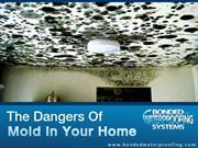 Why you need an Expert Inspection for Mold Removal in NJ