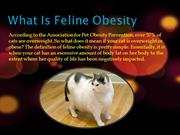 What is Feline Obesity