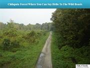 Chilapata Forest Where You Can Say Hello To The Wild Beasts