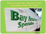 Tree Care San Jose - Bay Area Tree Specialists (408) 728-7598