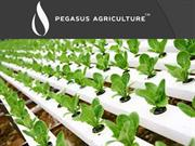 Hydroponics For The Economical Food Culture Of Middle – East