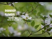 1-FLO-Dogwood flowers-From my heart-Frederic Delarue piano