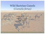 Project ppt- Wild Bactrian camels