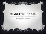 Diabetes in dogs. Symptoms and treatment