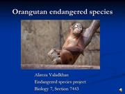 Orangutans endangered species presentation