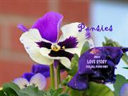 1-FLO-Pansies-Love story-Violin Piano duet