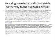 Your dog travelled at a distinct stride on the way to the supposed dis