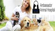 Special Vet services at Animal Hospital of Windsor