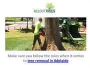 Tree Removal Adelaide - Best Tree Stump Removal Adelaide