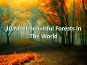 10 Most Beautiful Forests In The World