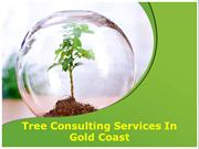Tree consulting services in Gold Coast