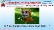 Is A Cat Parasite Controlling Your Brain