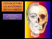 ANATOMIA DE LA CABEZA