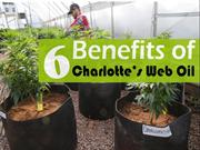 6 Benefits of Charlotte's Web Oil